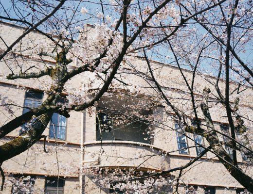 kinh nghiệm du lịch nhật bản sakura