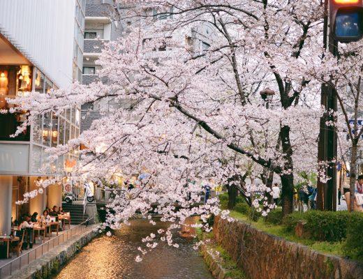 du lịch nhật bản mùa sakura